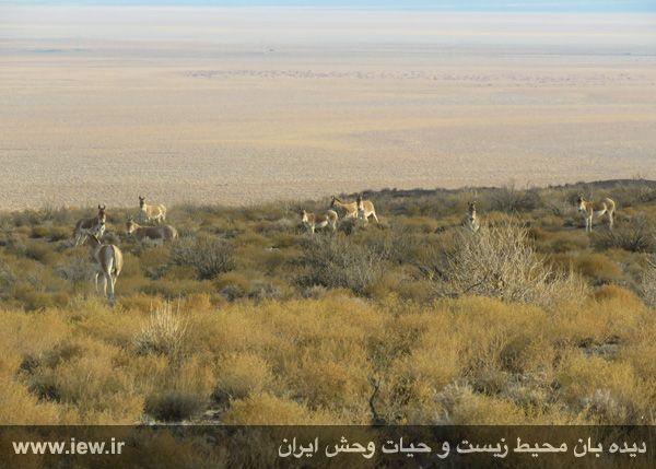 [تصویر:  961022_bahramghoor-42.jpg]