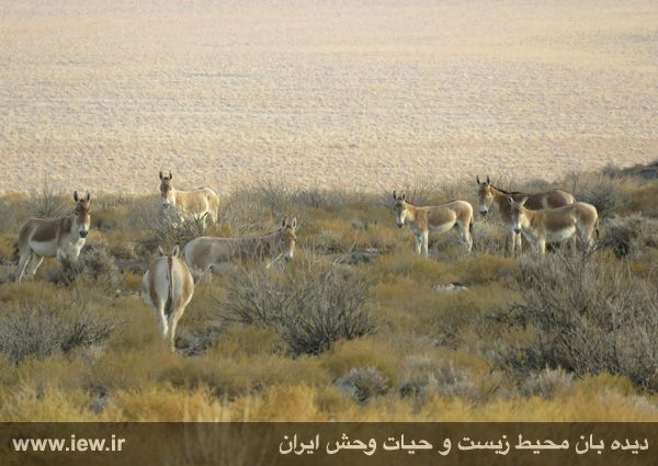[تصویر:  961022_bahramghoor-43.jpg]
