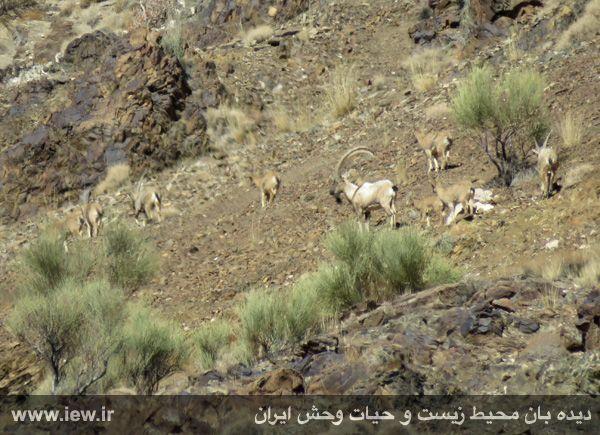 [تصویر:  961022_bahramghoor-5.jpg]
