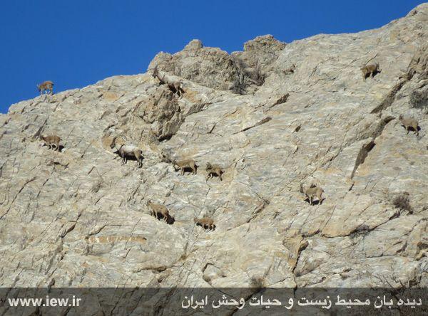 [تصویر:  961022_bahramghoor-61.jpg]