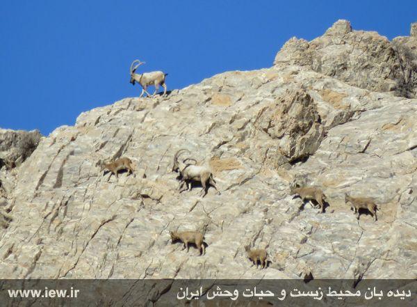[تصویر:  961022_bahramghoor-7.jpg]