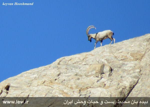 [تصویر:  961022_bahramghoor-8.jpg]