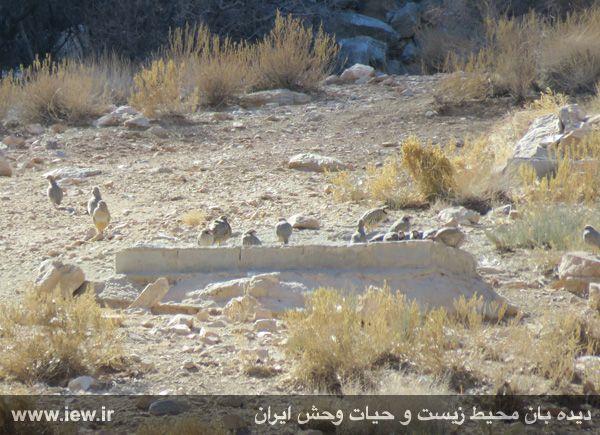 [تصویر:  961022_bahramghoor-9.jpg]