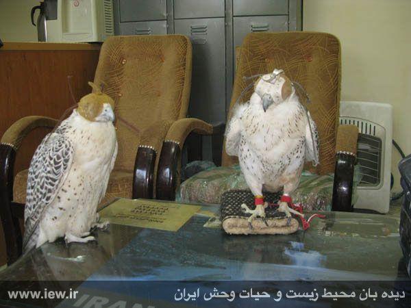 قیمت پرنده قوش J R's Birds - February 2009