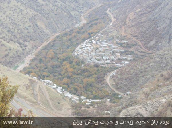 آبگیری سدهای داریان و بلبر، آخرین زیستگاه پلنگ کردستان را نابود خواهد کرد