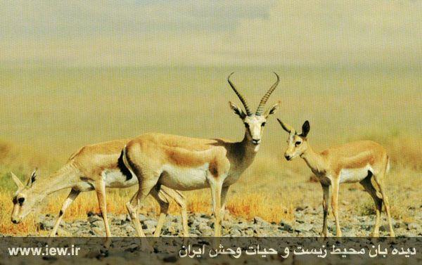 Image result for پناهگاه موته