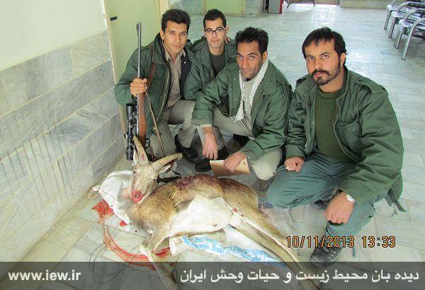 شکارچیان قوچ وحشی در شاهرود